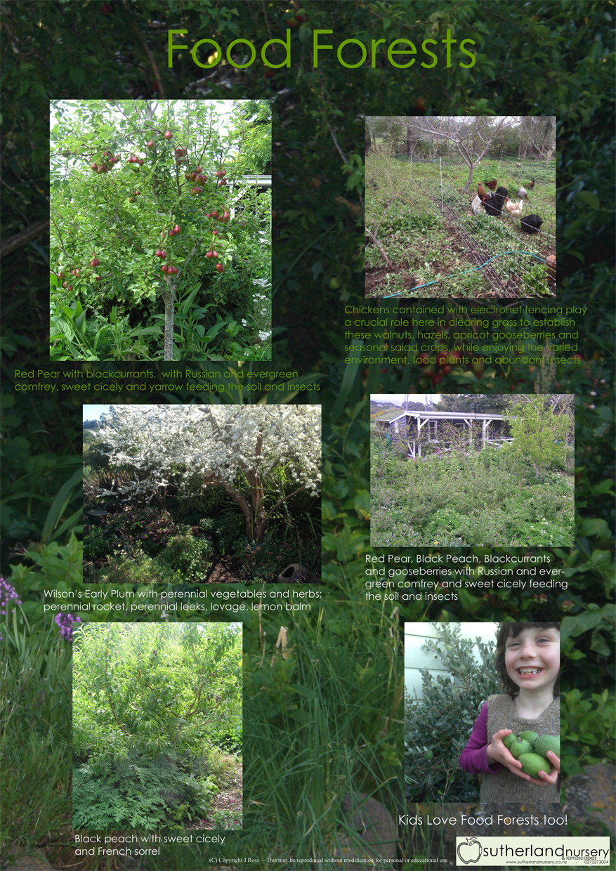 Food Forest Examples