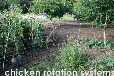 Chicken Rotation Systems