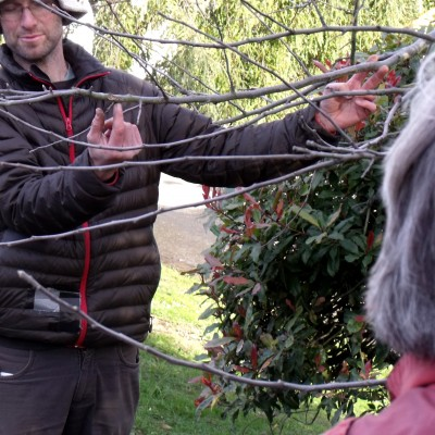 Pruning Workshop Waitati