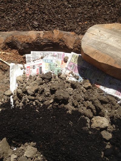 Newspaper weed barrier used under vegetable beds, saving on digging and weed removal
