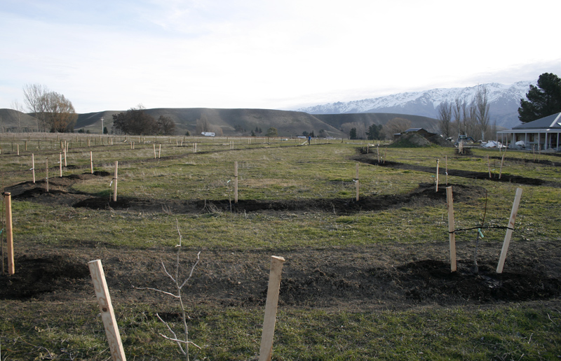planting nut orchard