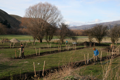 Permaculture Orchard Central Otago - Design/Planting 2016