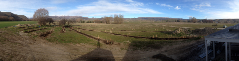 Tarras orchard planted