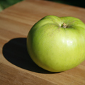Bramleys Seedling Apple