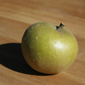 Brownlees Russet Apple