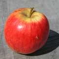Fortune Apple