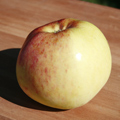 Peasgood's Nonsuch Apple